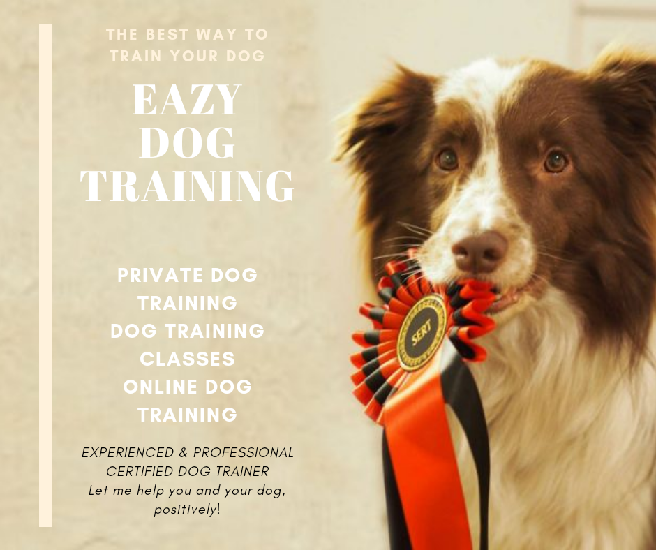 Clicker Training - Canine Training in Sydney - Easy Dog